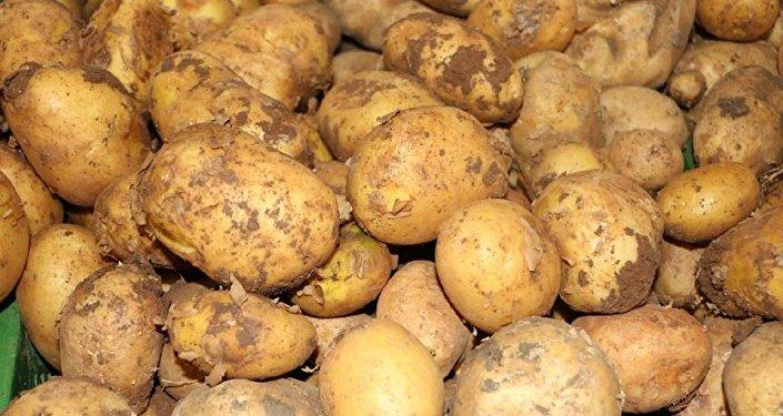 Rusya, Kazakistan'dan patates ithalatını askıya aldı