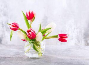 Kadıköy Vazo Çiçek Çeşitleri